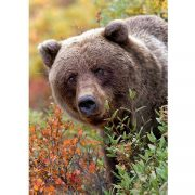 Grizzly medve 1000 db-os puzzle
